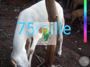Bon prix de 50mille a 90mil Sabalibougou/BAmako